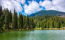 Mountain lake Synevir among the forest Stock Image