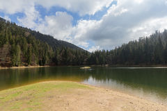 Mountain lake Synevyr in the forest Royalty Free Stock Photography