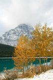 Mountain lake & trees. Lake and trees in Banff National Park Royalty Free Stock Photography