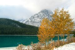 Mountain lake & trees. Lake and trees in Banff National Park Stock Photos