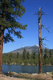 Mountain lake and trees Stock Images