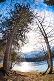Mountain Lake trees Stock Photography
