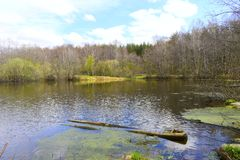 Mountain lake. Two logs in the water. Green foliage on the banks of the pond. Blue sky white clouds Royalty Free Stock Photos