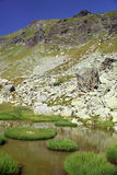 Mountain lake vegetation. Specific vegetation around of mountain lake Royalty Free Stock Images