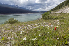 Mountain Lake and Wildflowers - Jasper National Park, Canada Stock Photography