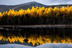 Mountain lake with yellow forest, Russia, Siberia, Froliha near lake Baikal royalty free stock photos