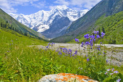 Mountain landscape. With a snowy peak and beautiful alpine flowers Stock Photography