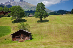 Mountain landscape. With field, house, trees and beautiful sky Royalty Free Stock Photo