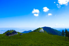 Mountain landscape. Piatra Mare Chalet and it's surroundings durring summer Stock Images