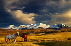 Mountain landscape. Grazing horses at sunset, plateau Ukok, the junction of Russian, Mongolian and Chinese boarders