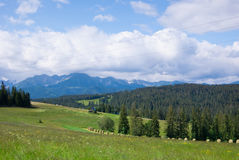 Mountain landscape. With trees in southern Poland Royalty Free Stock Photos