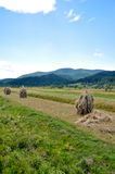 Mountain landscape. Haystacks against beautiful high mountains Stock Image