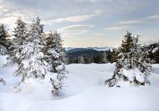 Mountain landscape. Winter mountain landscape (Ukraine, Carpathian Mt's Royalty Free Stock Photography