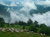 Mountain landscape. Mountain lanscape with sheep flock royalty free stock images