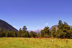 Mountain landscape in the afternoon. Meadow, pine forest Stock Images