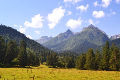 Mountain landscape in the afternoon. Meadow, pine forest Royalty Free Stock Photo