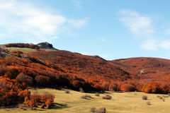Mountain landscape autumn, with beeches. A mountain landscape, in autumn, with beeches, madonie mountains, near palermo, sicily, landscape cut Royalty Free Stock Images