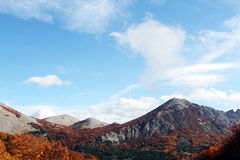 Mountain landscape autumn, with beeches. A mountain landscape, in autumn, with beeches, madonie mountains, near palermo, sicily, landscape cut Stock Photo