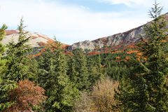 Mountain landscape autumn, fir trees Royalty Free Stock Images
