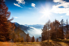 Mountain landscape in autumn: larch trees, shining sun, foggy va