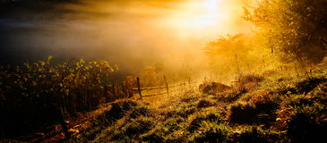 Mountain landscape with autumn morning fog at sunrise - Fundatur Royalty Free Stock Photography