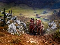 Mountain landscape in autumn morning and horses carrying hay wag. On - Fundatura Ponorului, Romania Stock Image