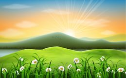 Mountain landscape background with daisies flower Stock Image