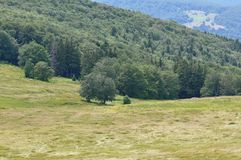 Mountain landscape. Beautiful meadow and mountain landscape in Romania Stock Image
