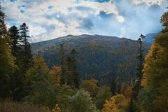 In the mountains, in the forest, on a bright sunny day. royalty free stock photos