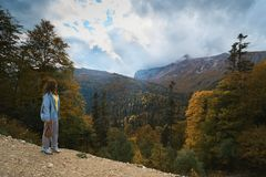 In the mountains, in the forest, on a bright sunny day. royalty free stock photography