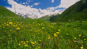 Mountain Landscape with blooming yellow flowers in the foregroun Stock Photography