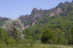 Mountain landscape with blossoming wild apple tree, Adygea, Russ Stock Photo