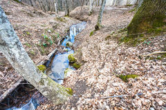 Mountain landscape with brook in forest in spring Royalty Free Stock Images