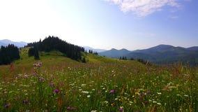 Mountain Landscape stock video