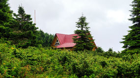 Mountain landscape in Carpathians, wooden house among the pines in rain weather Ukraine. Royalty Free Stock Image