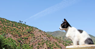 Mountain landscape, cat foreground. The mountain landscape, cat foreground Stock Images