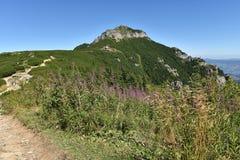 Mountain landscape. Ceahlau mountains, Eastern Carpathians, Roma Royalty Free Stock Images