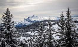 Mountain landscape with christmass trees covered with snow. Landscape with christmass trees covered with snow and a mountain far away, France, Morzine, Les Gets Stock Photos