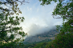 Mountain landscape with clouds through the trees. Royalty Free Stock Photography