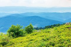 Mountain landscape on cloudy summer noon. Green meadows on the hills. beautiful nature scenery. forested distant ridge royalty free stock image