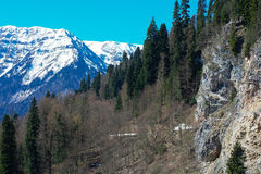 Mountain landscape with colorful forest and high snow-capped peaks of the Caucasus mountains beautiful amazing day. Mountain slopes covered with forests and Royalty Free Stock Images