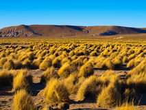 Mountain landscape of Cordillera de Lipez in. Typical grass clumps in Cordillera de Lipez in southern bolivian Altiplano Royalty Free Stock Photography