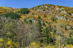 Mountain landscape with differently trees in venerable autumnal forest and glade, Rila mountain Stock Photos