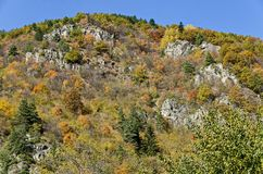 Mountain landscape with differently trees in venerable autumnal forest and glade, Rila mountain Stock Photo