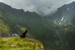 Mountain landscape. Dog watching over a valley in Fagaras Stock Photo