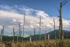 Mountain landscape with dry trees on a clear day. Ukraine, Carpathians Royalty Free Stock Photography