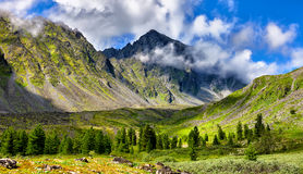 Mountain landscape at edge of forest Royalty Free Stock Photo