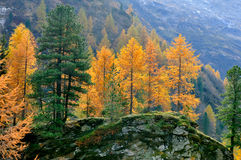 Mountain landscape in fall Stock Images