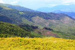 Mountain landscape. Felling of trees in the mountains Stock Photo