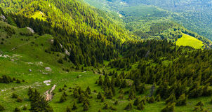 Mountain Landscape. With fir trees, Ciucas, Romania Royalty Free Stock Photos